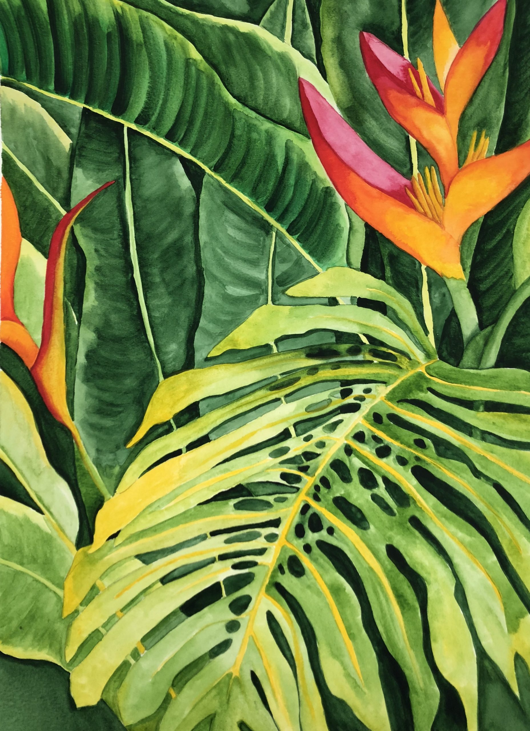 seychelles flowers